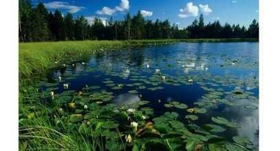 Lacul de mihai eminescu online dating